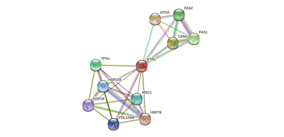 ETR1 protein (Saccharomyces cerevisiae) - STRING interaction network