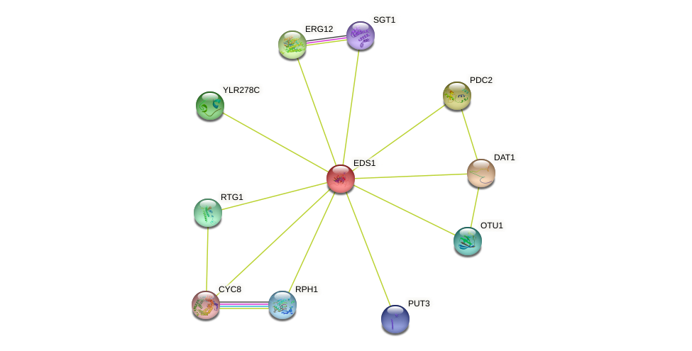EDS1 protein (Saccharomyces cerevisiae) - STRING interaction network
