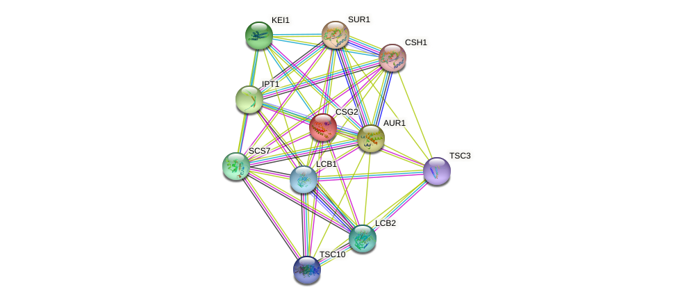 CSG2 protein (Saccharomyces cerevisiae) - STRING interaction network