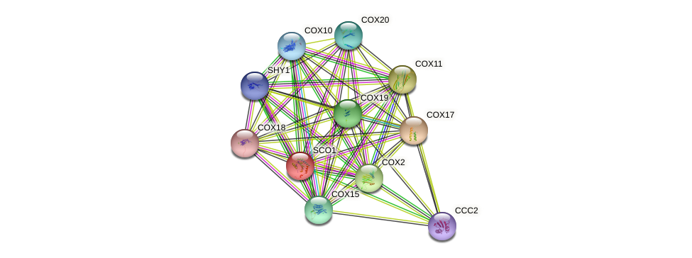 SCO1 protein (Saccharomyces cerevisiae) - STRING interaction network