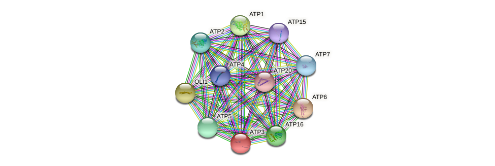 ATP3 protein (Saccharomyces cerevisiae) - STRING interaction network