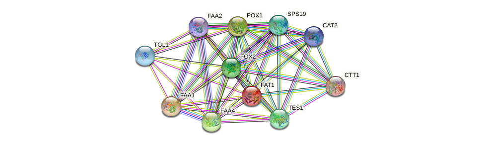 FAT1 protein (Saccharomyces cerevisiae) - STRING interaction network