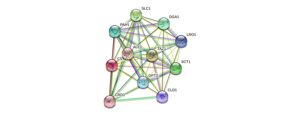 CST26 protein (Saccharomyces cerevisiae) - STRING interaction network
