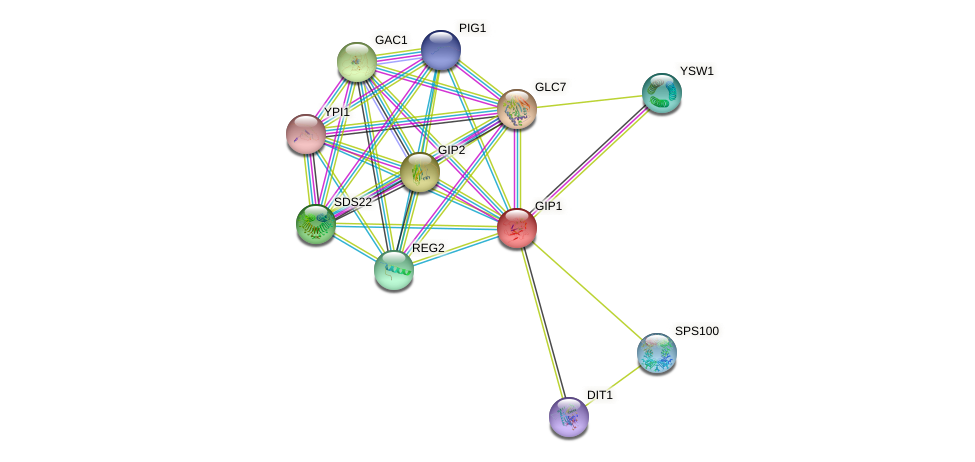 GIP1 protein (Saccharomyces cerevisiae) - STRING interaction network