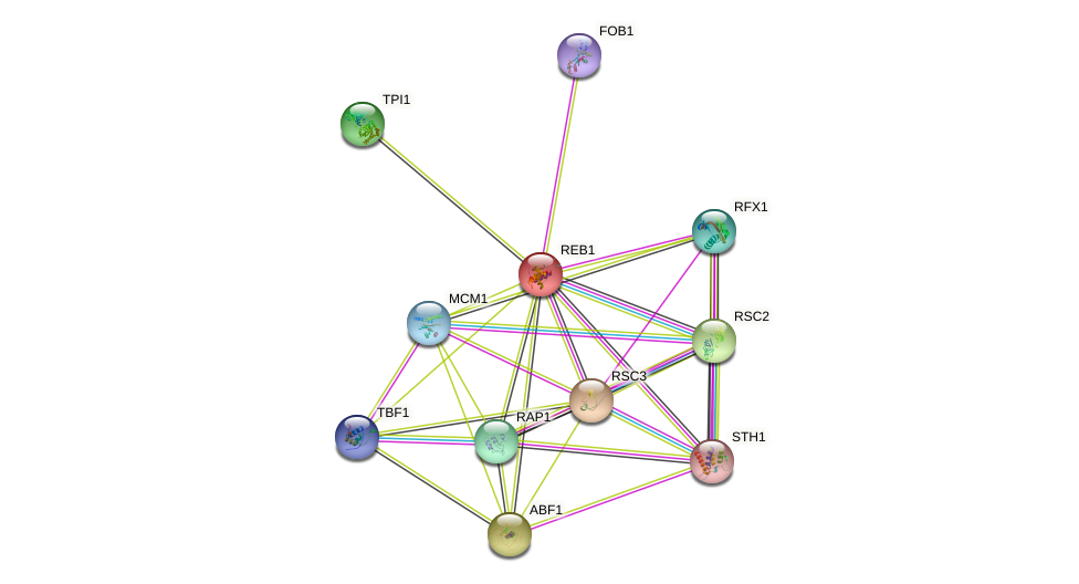 REB1 protein (Saccharomyces cerevisiae) - STRING interaction network
