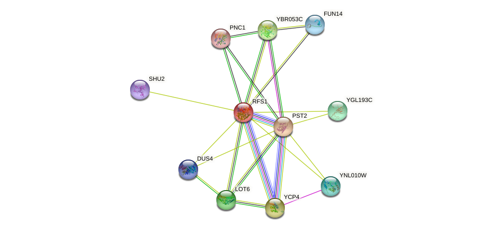 RFS1 protein (Saccharomyces cerevisiae) - STRING interaction network