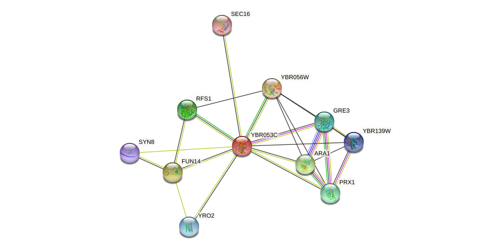 YBR053C protein (Saccharomyces cerevisiae) - STRING interaction network
