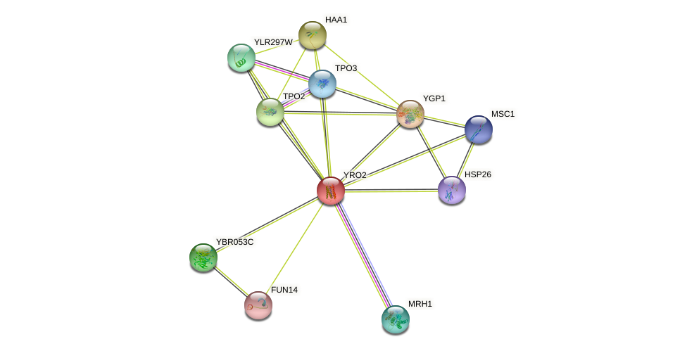 YRO2 protein (Saccharomyces cerevisiae) - STRING interaction network