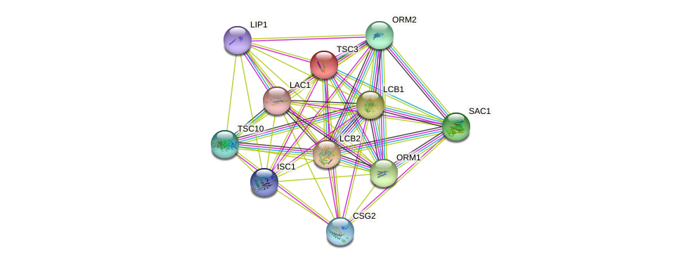 TSC3 protein (Saccharomyces cerevisiae) - STRING interaction network