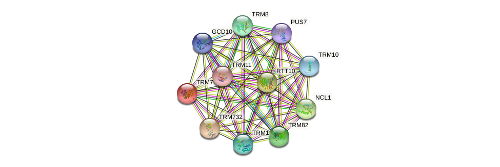 TRM7 protein (Saccharomyces cerevisiae) - STRING interaction network