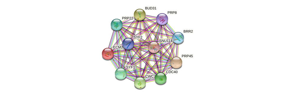 ECM2 protein (Saccharomyces cerevisiae) - STRING interaction network
