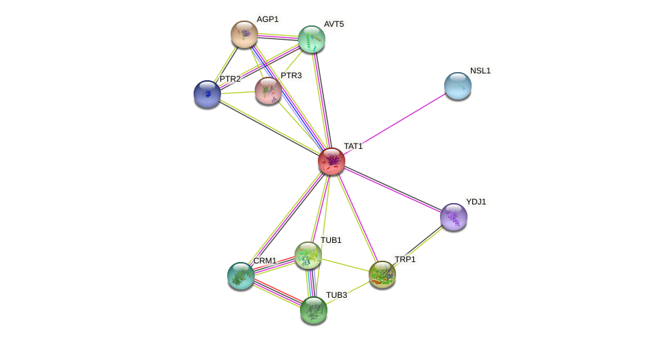 TAT1 protein (Saccharomyces cerevisiae) - STRING interaction network