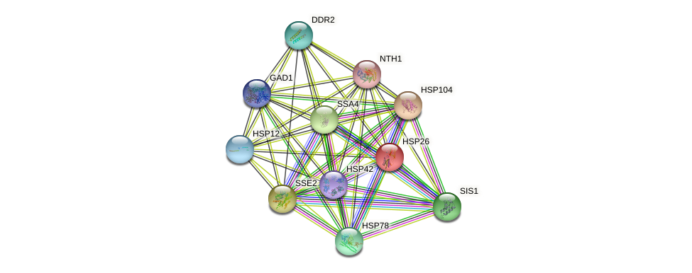 HSP26 protein (Saccharomyces cerevisiae) - STRING interaction network