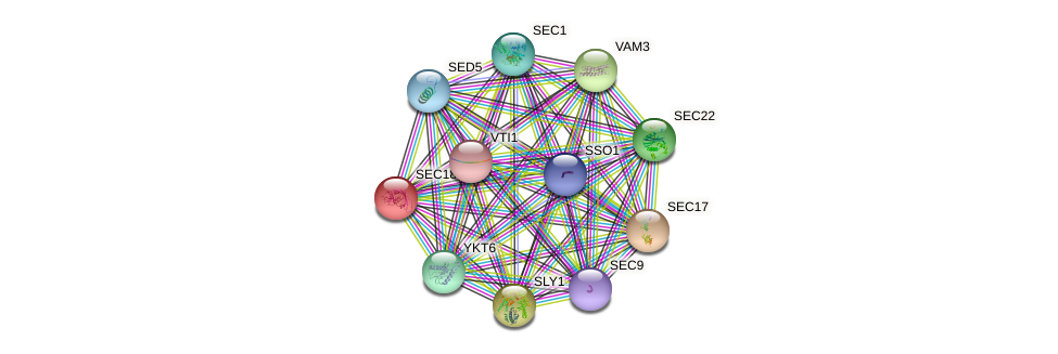 SEC18 protein (Saccharomyces cerevisiae) - STRING interaction network