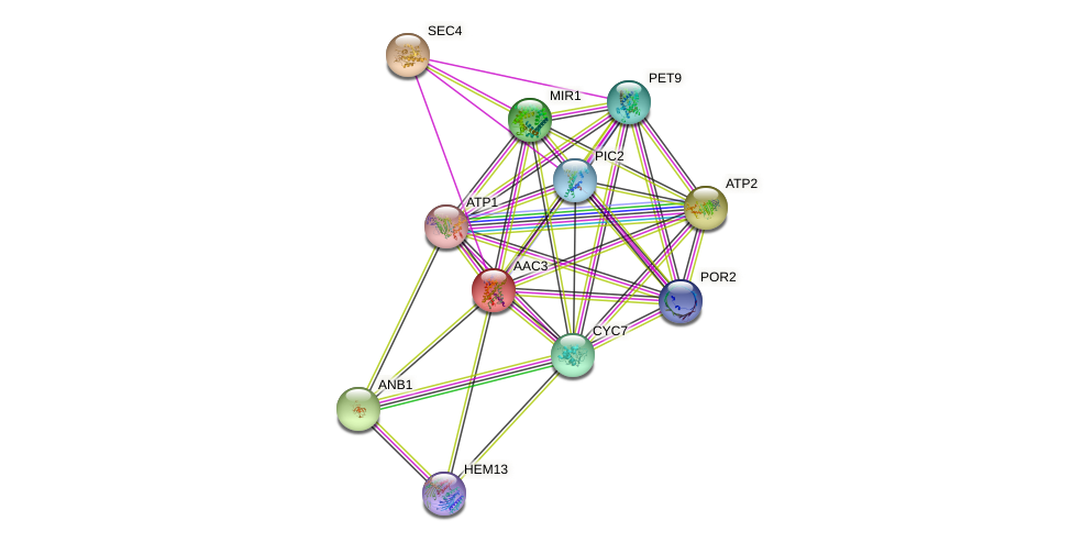 AAC3 protein (Saccharomyces cerevisiae) - STRING interaction network