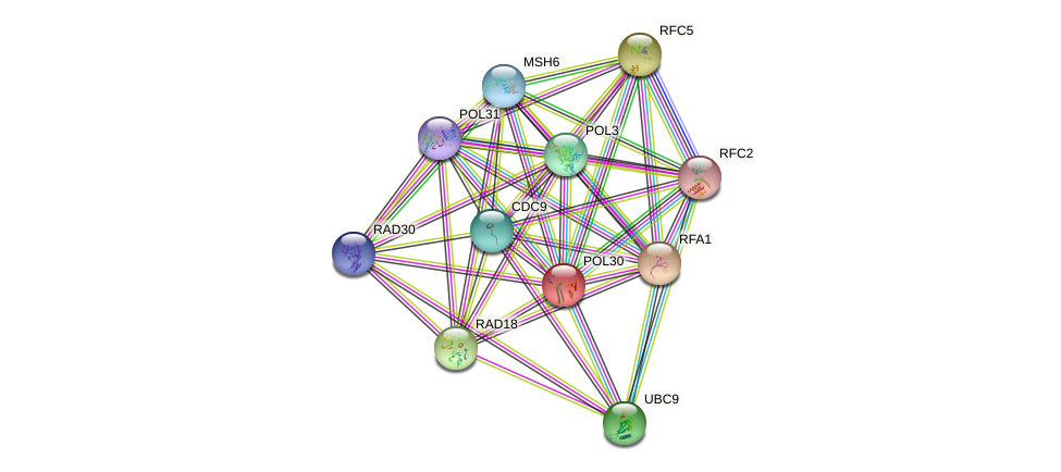 POL30 protein (Saccharomyces cerevisiae) - STRING interaction network