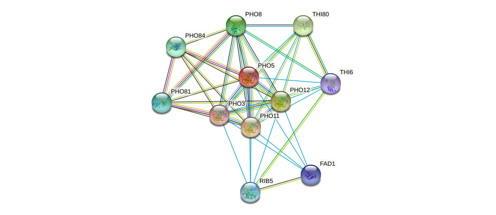 PHO5 protein (Saccharomyces cerevisiae) - STRING interaction network