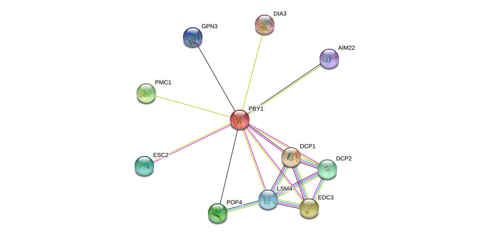 PBY1 protein (Saccharomyces cerevisiae) - STRING interaction network