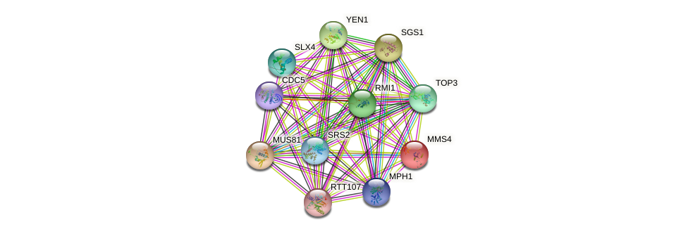 MMS4 protein (Saccharomyces cerevisiae) - STRING interaction network