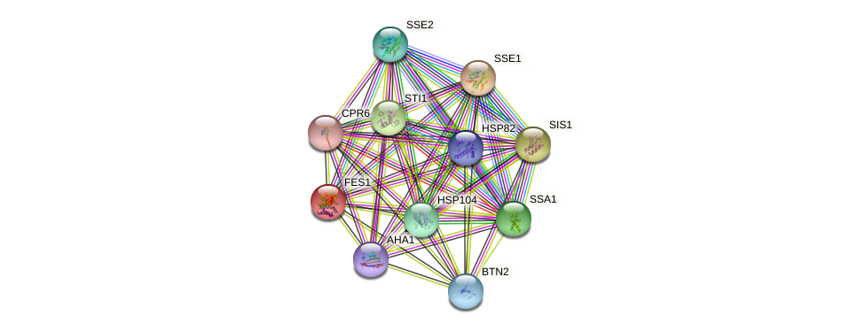 FES1 protein (Saccharomyces cerevisiae) - STRING interaction network