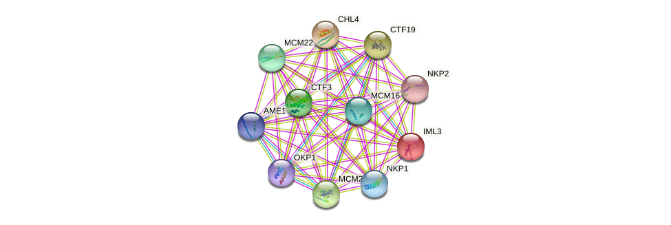 IML3 protein (Saccharomyces cerevisiae) - STRING interaction network