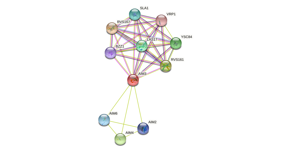 AIM3 protein (Saccharomyces cerevisiae) - STRING interaction network