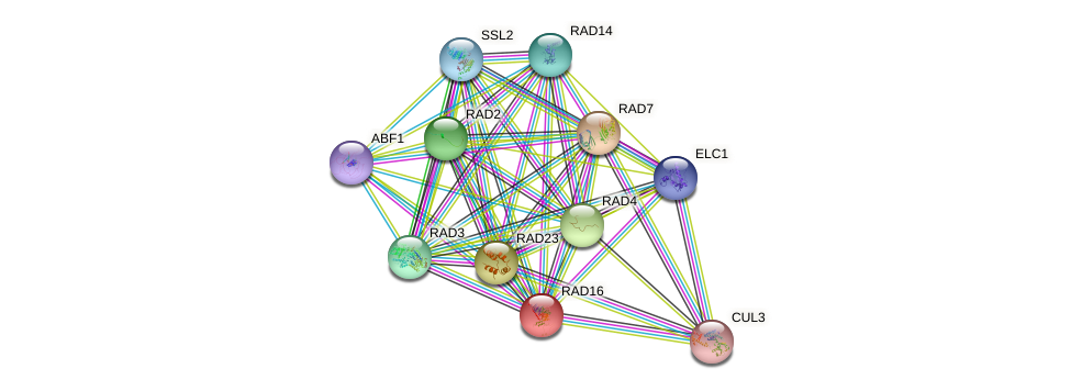 RAD16 protein (Saccharomyces cerevisiae) - STRING interaction network