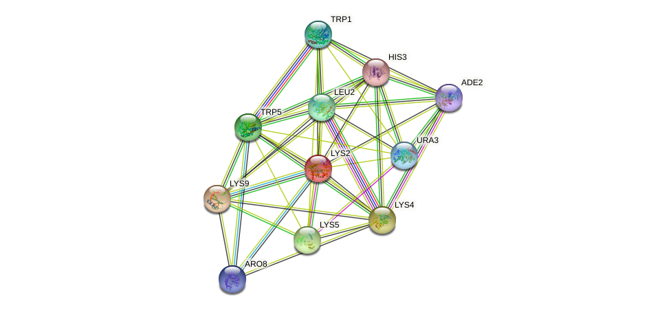 LYS2 protein (Saccharomyces cerevisiae) - STRING interaction network