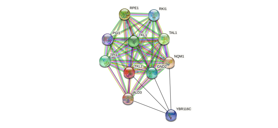 TKL2 protein (Saccharomyces cerevisiae) - STRING interaction network