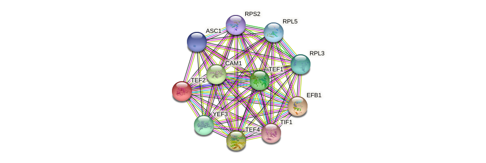 TEF2 protein (Saccharomyces cerevisiae) - STRING interaction network