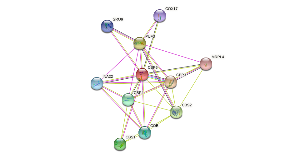 CBP6 protein (Saccharomyces cerevisiae) - STRING interaction network