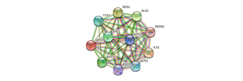 GRS1 protein (Saccharomyces cerevisiae) - STRING interaction network