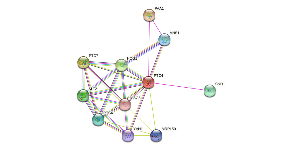 PTC4 protein (Saccharomyces cerevisiae) - STRING interaction network