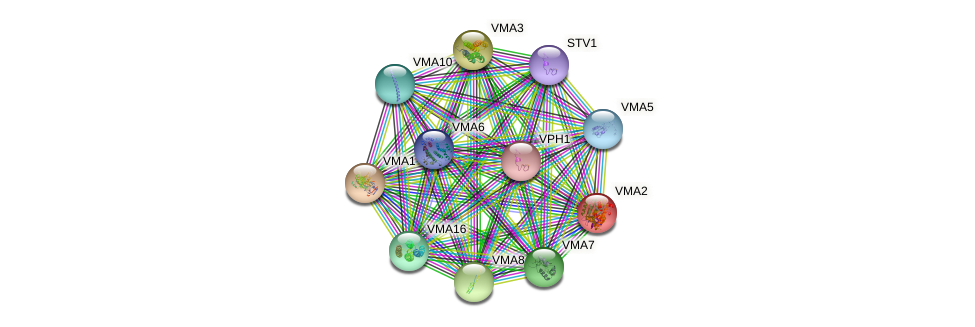 VMA2 protein (Saccharomyces cerevisiae) - STRING interaction network
