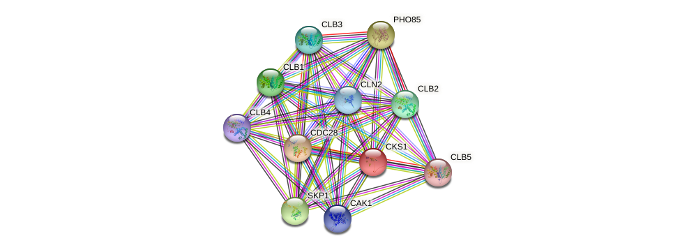 CKS1 protein (Saccharomyces cerevisiae) - STRING interaction network