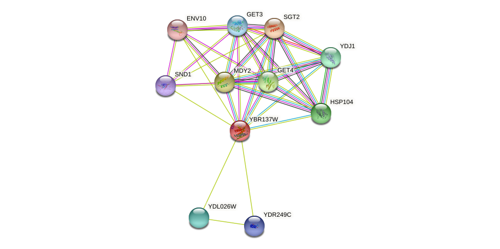 YBR137W protein (Saccharomyces cerevisiae) - STRING interaction network