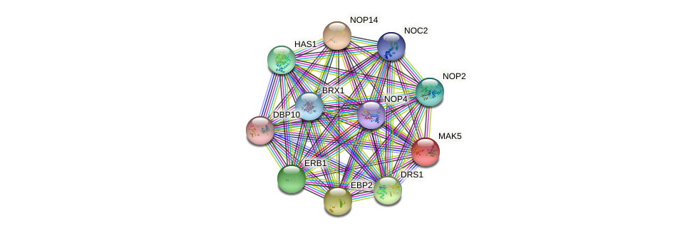 MAK5 protein (Saccharomyces cerevisiae) - STRING interaction network
