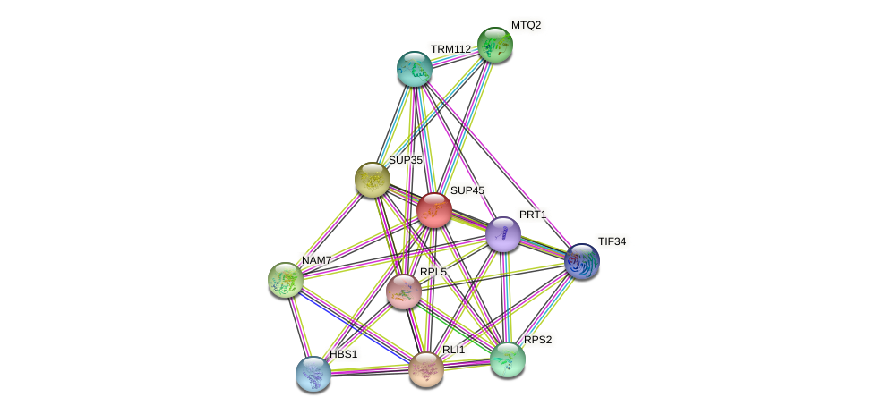 SUP45 protein (Saccharomyces cerevisiae) - STRING interaction network