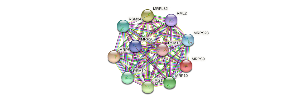 MRPS9 protein (Saccharomyces cerevisiae) - STRING interaction network