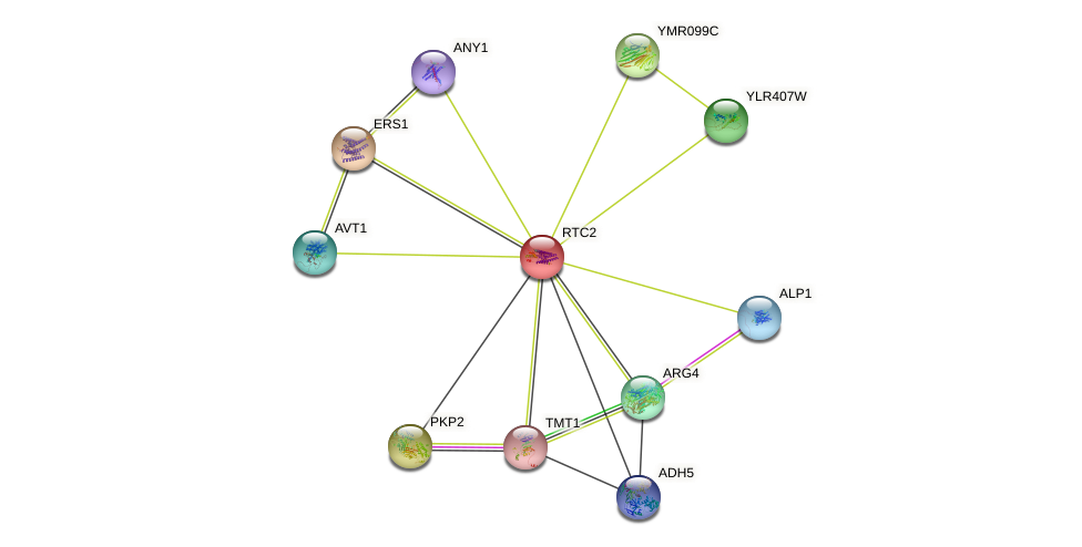 RTC2 protein (Saccharomyces cerevisiae) - STRING interaction network