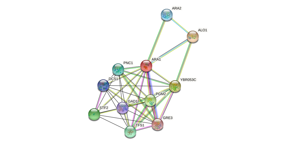 ARA1 protein (Saccharomyces cerevisiae) - STRING interaction network