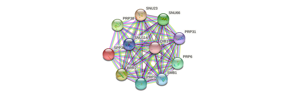 SPP381 protein (Saccharomyces cerevisiae) - STRING interaction network