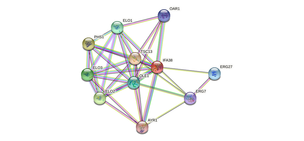 IFA38 protein (Saccharomyces cerevisiae) - STRING interaction network