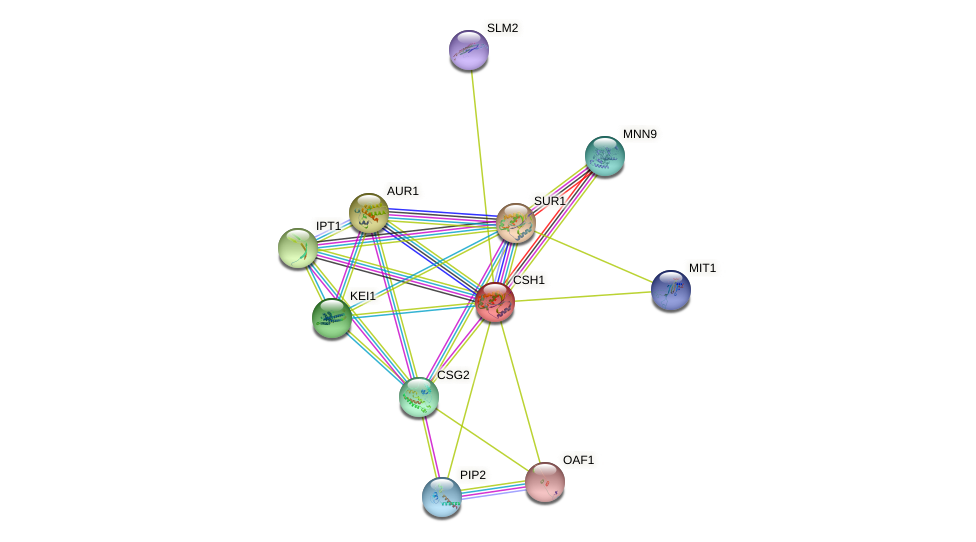 CSH1 protein (Saccharomyces cerevisiae) - STRING interaction network