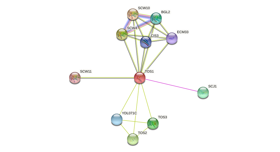 TOS1 protein (Saccharomyces cerevisiae) - STRING interaction network