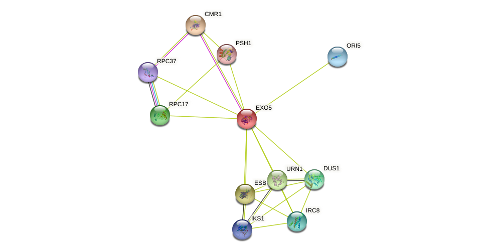EXO5 protein (Saccharomyces cerevisiae) - STRING interaction network