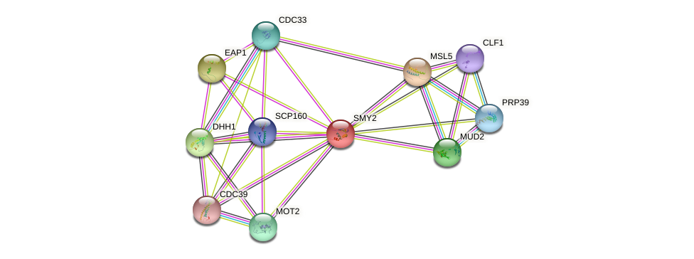 SMY2 protein (Saccharomyces cerevisiae) - STRING interaction network