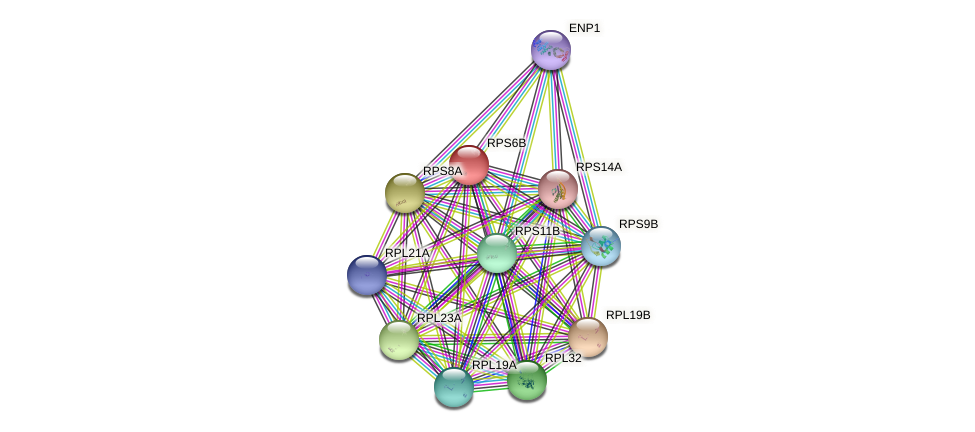 RPS6B protein (Saccharomyces cerevisiae) - STRING interaction network