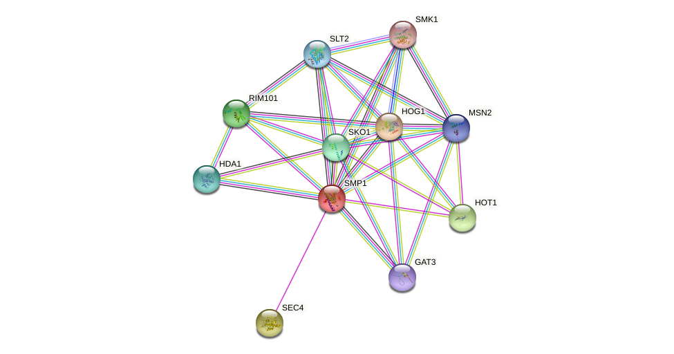 SMP1 protein (Saccharomyces cerevisiae) - STRING interaction network