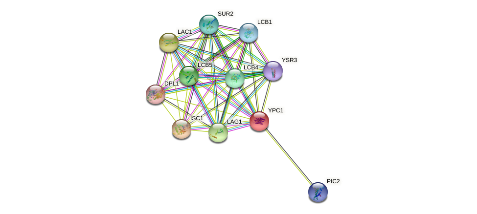 YPC1 protein (Saccharomyces cerevisiae) - STRING interaction network